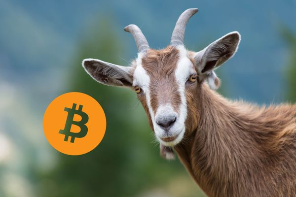 Bitcoin is the name of Mark Zuckerberg's goat
